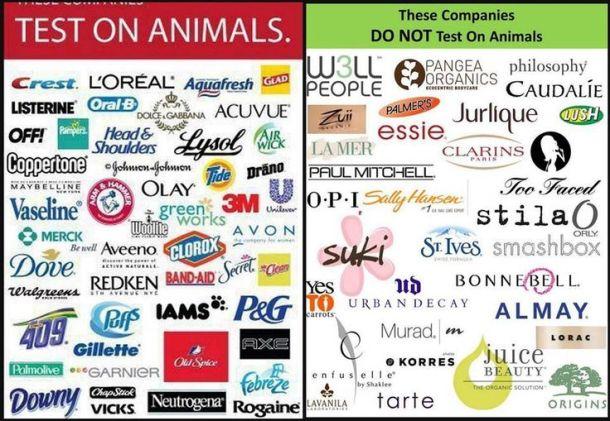 animaltesting.jpg